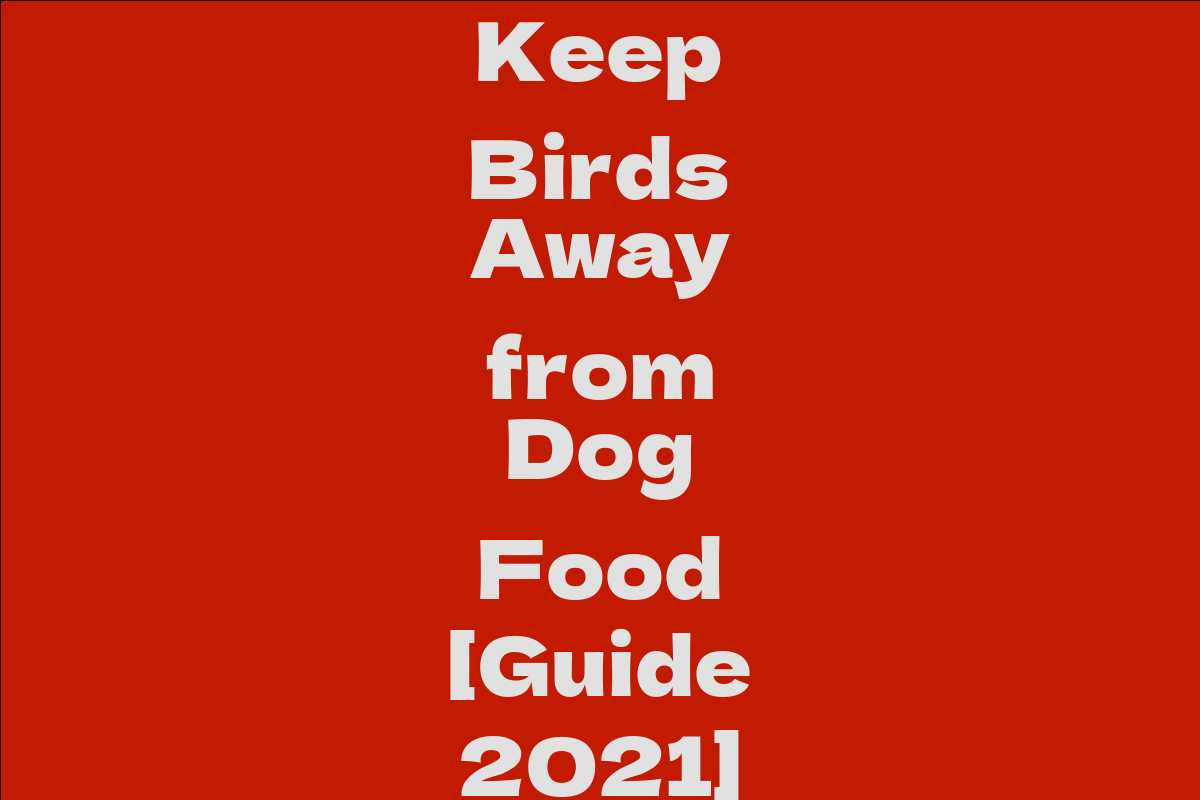 Keep Birds Away from Dog Food [Guide 2021]