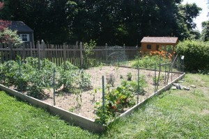 Protect the Garden: How To Keep Birds Away From Grass Seed